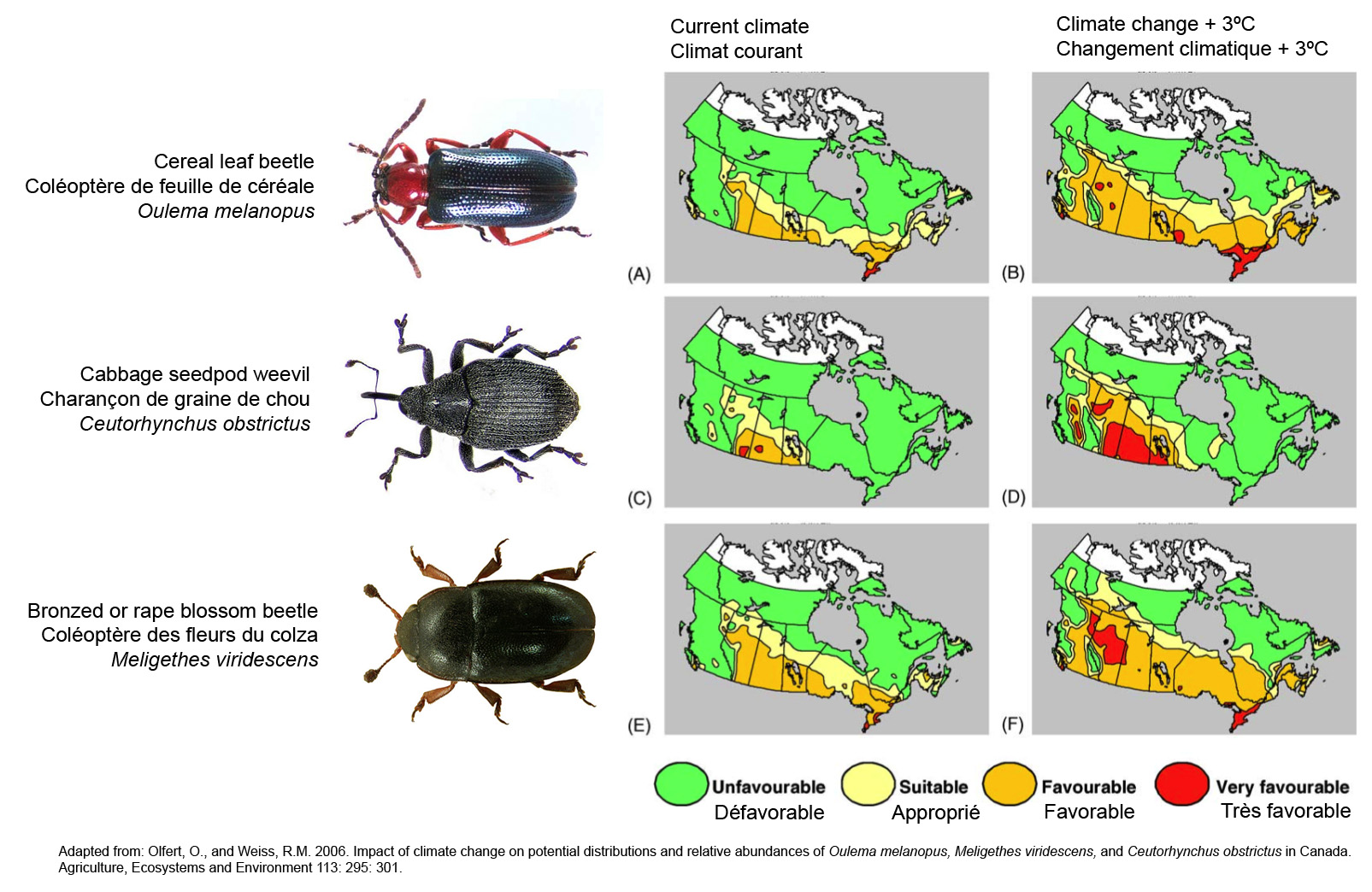 Three Invasive Beetles